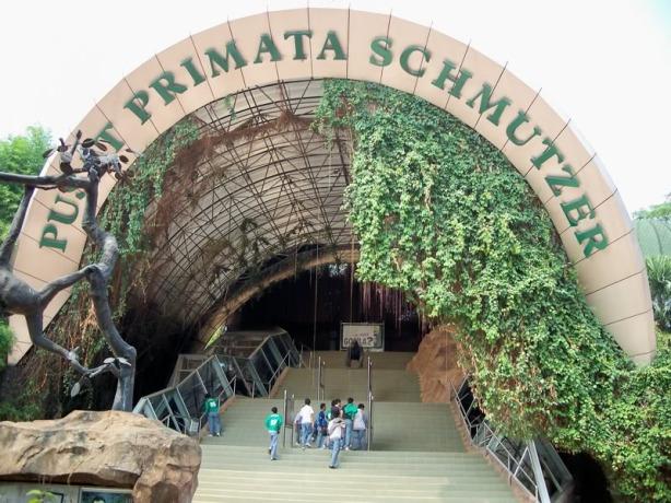Pusat Primata di Kebun Binatang Ragunan