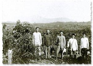 Imigran dari Tiongkok di perkebunan Malaya